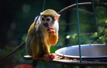 monkey-1416037_960_720