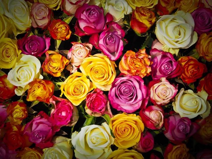 roses-1229148_960_720