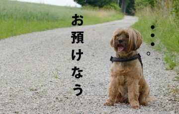 dog-832123_960_720