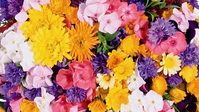 Flower-wallpaper-50